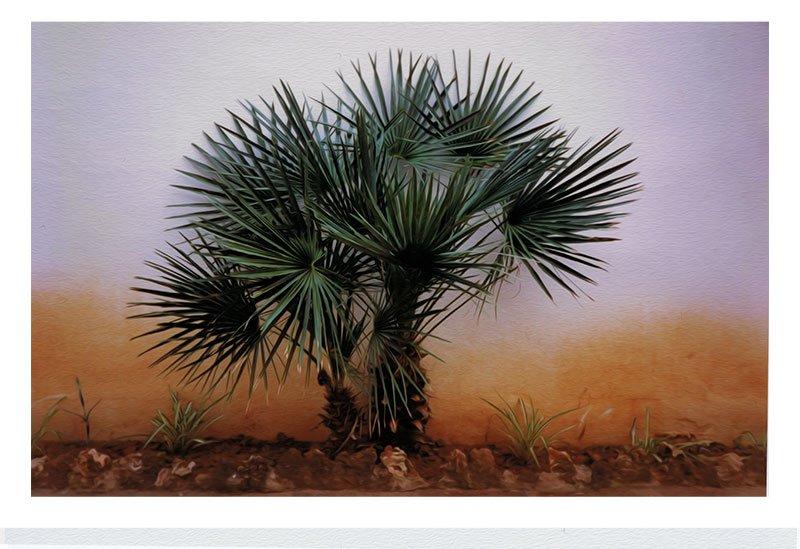 3ftdeep_minorca-palm